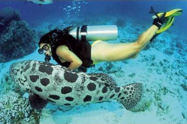 http://www.vacanze-scoglitti.it/fr/img/activites/scoglitti-subacqueo.jpg